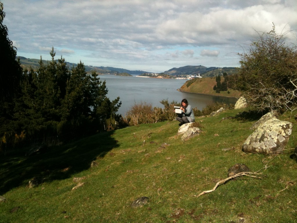 Sally sketches on Smith's Hill, just behind Tayler Point House. Port Chalmers is in the background.